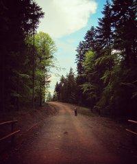 Beskidy droga w lesie